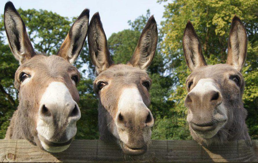 donkeys-3-donkeys-1